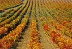 Bodegas Vinedos de Aldeanueva Mecenas