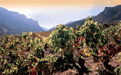 spanische Weinregion Rioja